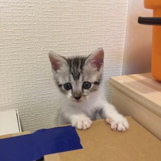 女子力高め 可愛い子猫