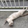 人懐こい野良猫ちゃんの里親募集 サムネイル2