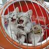 女子力高め 可愛い子猫 サムネイル7