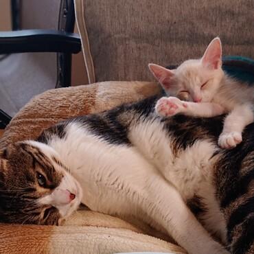 いつの間にか背中で寝てる…。