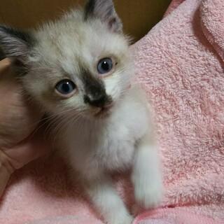 可愛い美猫ちゃん