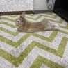 ♀4才 ライオンラビット×ミニウサギの里親募集