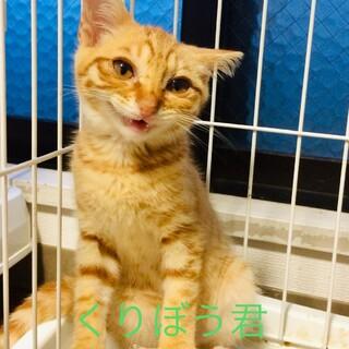 可愛い盛りの子猫!くりぼう君