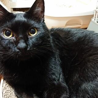 ♥とっても穏やかな性格✨見た目も可愛い黒猫です❕♥