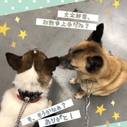 Edワンコと丈太郎くんのお散歩練習