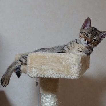 キャットタワーの上で王子様になってます