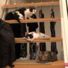 元気な3兄弟 仔猫ーズ♪