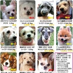 GO!保護犬GO☆保護犬の会(室内会場)in富士小山(富士霊園・富士スピードウェイ近く) サムネイル2