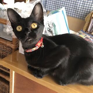 黒猫ベルが一生のお家を探しています