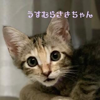フミフミゴロゴロ、甘えん坊のうすむらさきちゃん☆