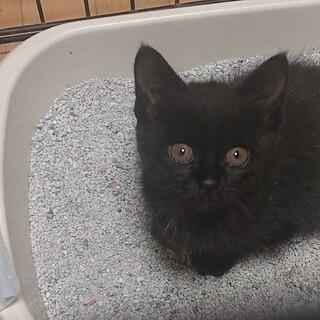 元気いっぱい黒猫の女の子❤️