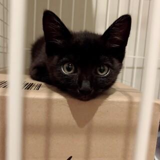 人懐こくて甘えん坊の黒猫の女の子 ジジちゃん