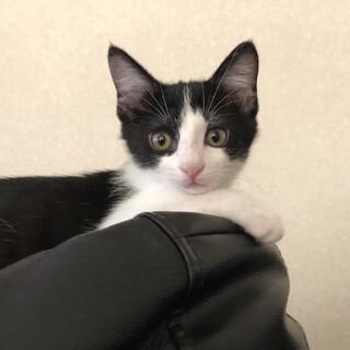 4月生まれの子猫 たけのこず はちく♂