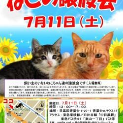 ★7月11日(土)「ねこの譲渡会」smile cat@中目黒(室内) サムネイル1