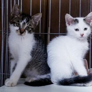 2匹一緒か先住猫がいる方優先