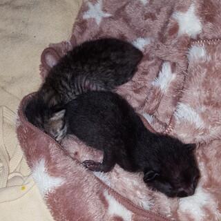 七夕産まれの子猫