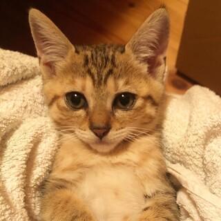 姉妹で保護した子猫( 2ヶ月弱) ①