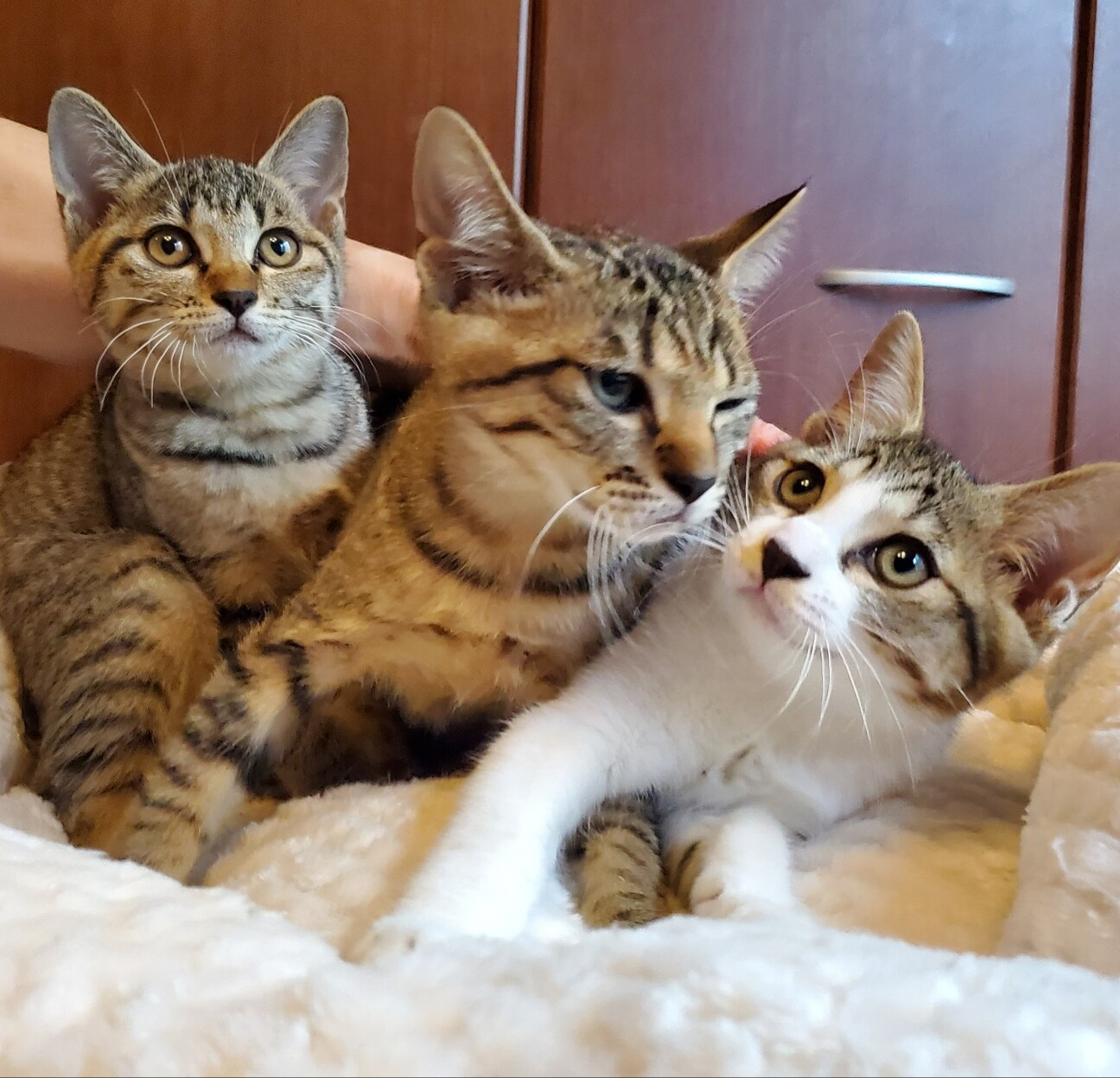 猫 オスメス 飼いやすい