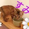 可愛いサビ猫の姉妹