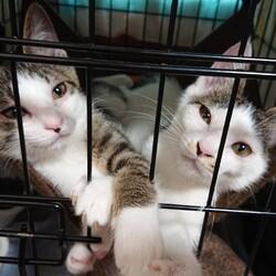 「7/11子猫のお見合い会開催します@第二弾!」サムネイル2