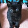 オセロ兄弟♡黒猫の月くん2ヵ月