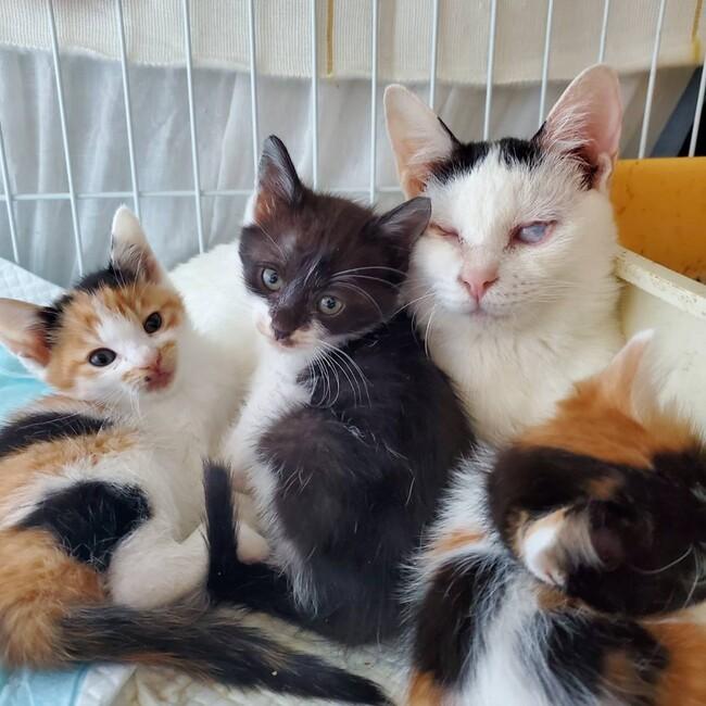 NPO法人 令和さくら猫 マザーヘレンのカバー写真