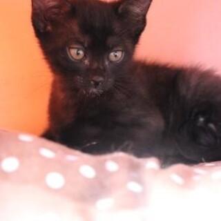 りん♡幸運の黒猫甘えん坊の男の子
