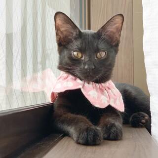 元気いっぱい黒猫姉妹の「アクビちゃん」