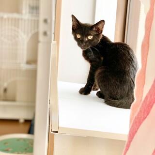 元気いっぱい黒猫姉妹の「クシャミちゃん」