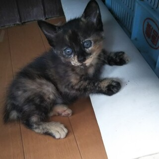 生後3か月の子猫ちゃん里親募集