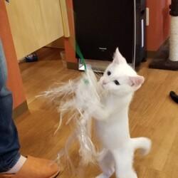 観光地の猫カフェ行き、野良ちゃんに会う