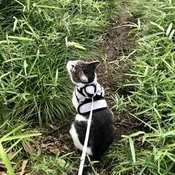 近所のペット飼いさんの噂の的