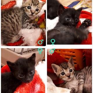 愛護センター引き出しの子猫ちゃんズ
