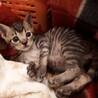 愛護センター引き出しの子猫ちゃんズ サムネイル4