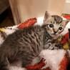愛護センター引き出しの子猫ちゃんズ サムネイル5