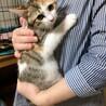 垂れ目が可愛い三毛猫❤︎スプリング