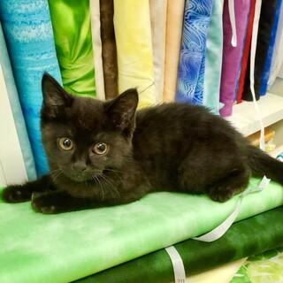 ちょっとフサフサな黒猫さんです♪♪