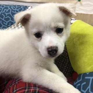 水玉ちゃん MIX子犬 2ケ月 女の子