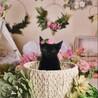 黒猫、2か月、オス、やんちゃでおちゃめ、ジジ、