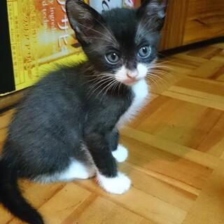 元気な仔猫です。白黒