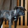 宮古島から琉球犬MIX「マヤ」