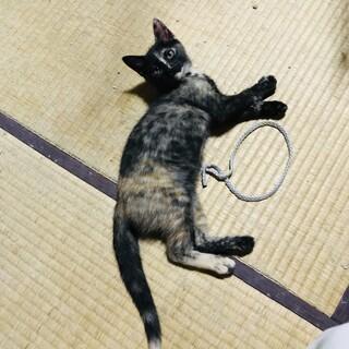 医療・人馴れ済 見ていて飽きないサビ柄 保護猫