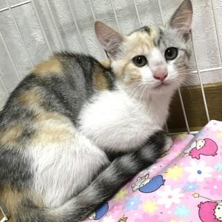 助けてください!エイズキャリアの子猫です
