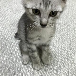 2か月ほどのかわいい子猫です♡