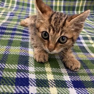 石材屋の軒下で保護された子猫