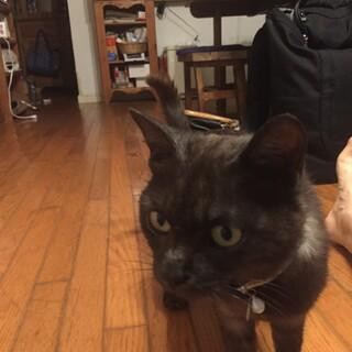 テニスコートに迷い込んでいた子猫ちゃんです