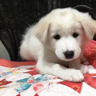 保護犬ナンバーD1441 中型犬仔犬
