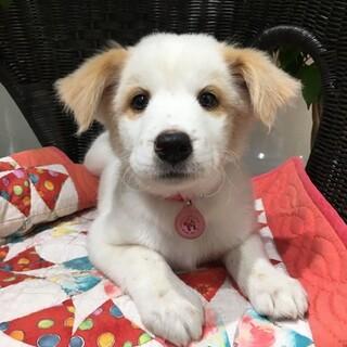 保護犬ナンバーD1442 中型犬仔犬