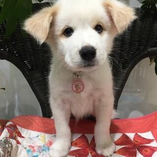 保護犬ナンバーD1443 中型犬仔犬