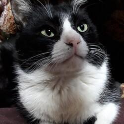 なついた野良猫を家猫に迎えたい